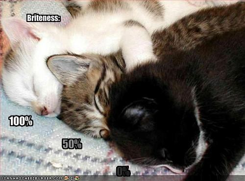 brightness cute kitten lolcats lolkittehs sleeping - 1548144896
