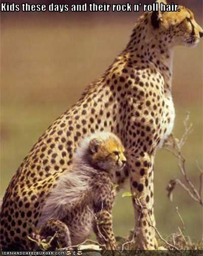 cheetah cute haircut kitten lolcheetahs lolkittehs rock and roll - 1549501184