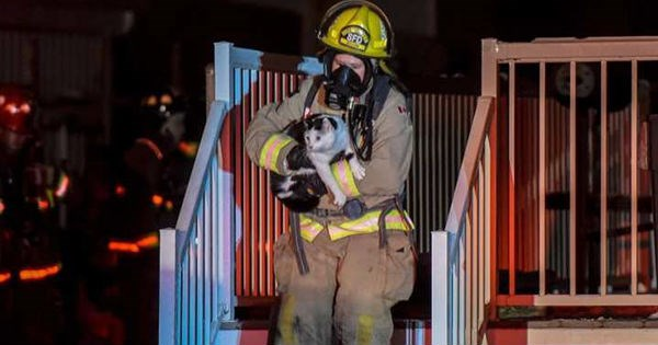 Canada,pets,fire,Cats,rescue