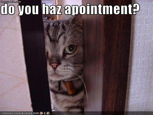 appointment,lolcats,secretary,smug,work