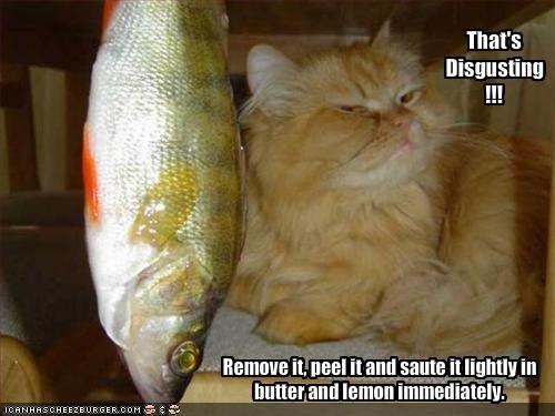 fish fud gross nom nom nom - 1550382336
