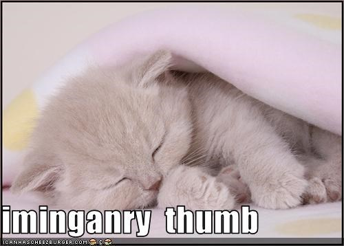 cute imaginary invisible kitten lolcats lolkittehs sleeping thumb - 1550417664