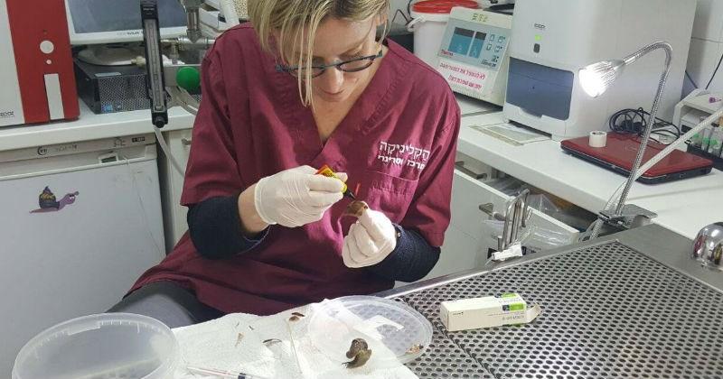 snails clinic veterinarian shell broken snail - 1551365