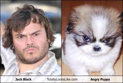 Angry Puppy,animals,dogs,jack black