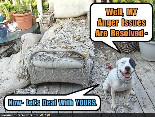 angry bad dog destruction issues pitbull - 1551634176