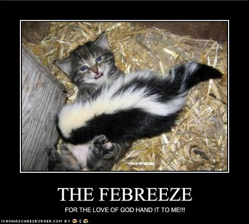 cute febreeze kitten lolcats lolkittehs lolskunks skunk smelly