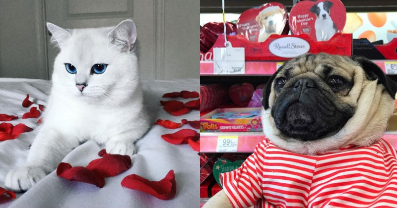 festive,pets,kisses,valentine,animals,Valentines day
