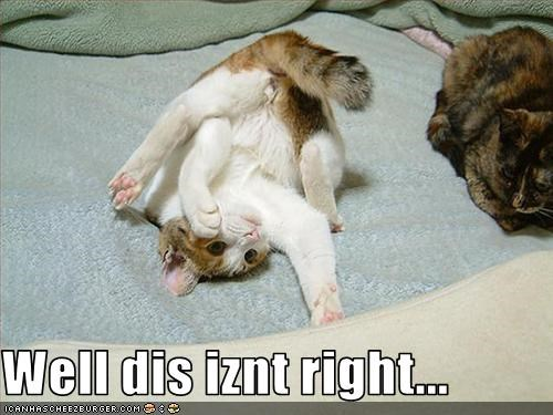 confused lolcats somersault yoga - 1554114816