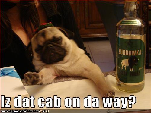 bar drunk pug taxi