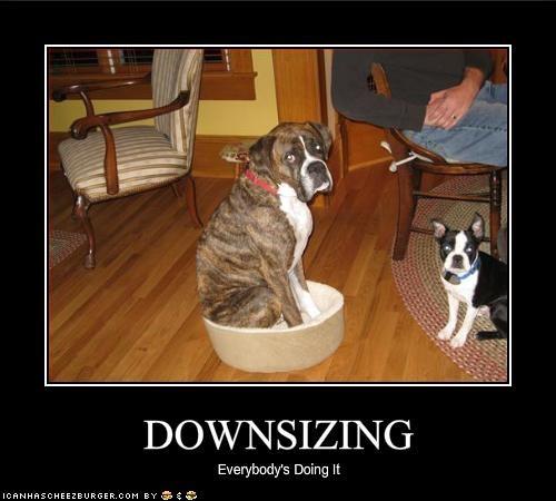 bed boston terrier boxer depression - 1555222272