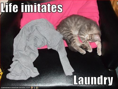 laundry,life,lolcats,look a like