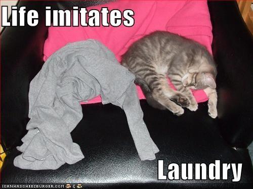 laundry life lolcats look a like - 1555942144