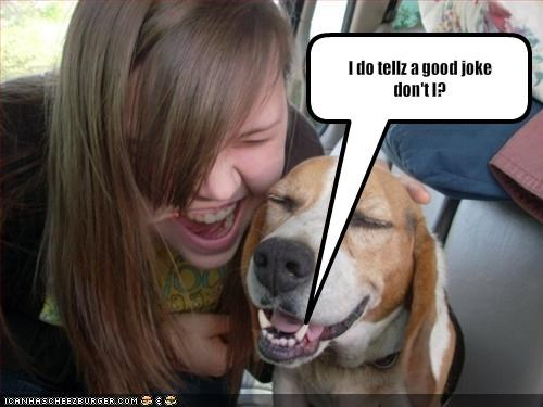 basset hound,child,human,joke,laugh,laughing