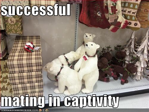 Successful Mating In Captivity Cheezburger Funny Memes Funny
