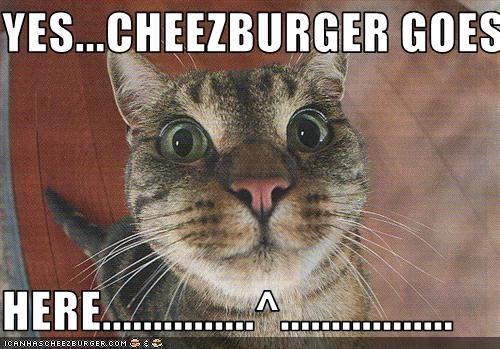 Cheezburger Image 1557452544