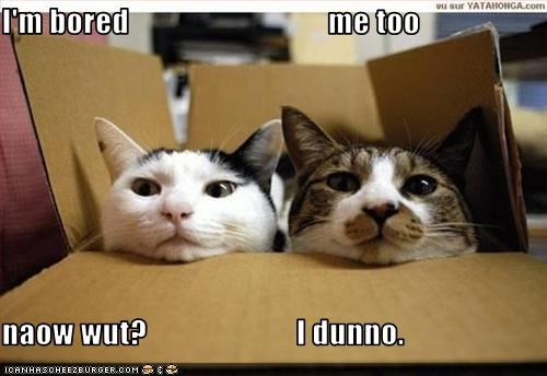 bored box lazy lolcats - 1558430976