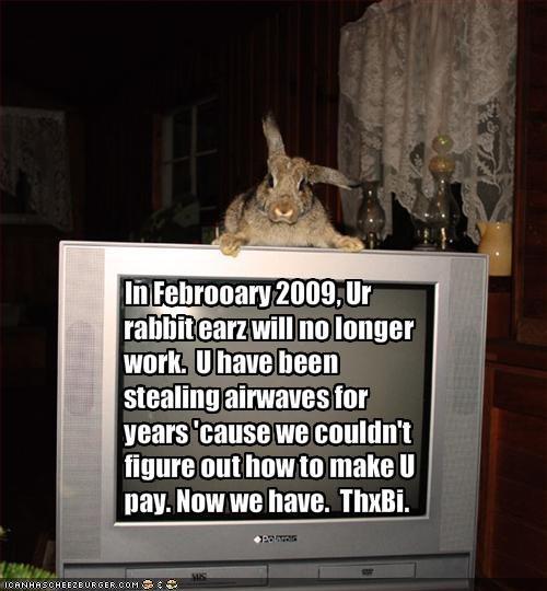 antennae bunny do not want ears kthxbai lolbuns TV - 1559593216