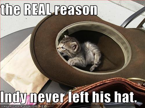 cute hat Indiana Jones kitten lolcats lolkittehs - 1560076032