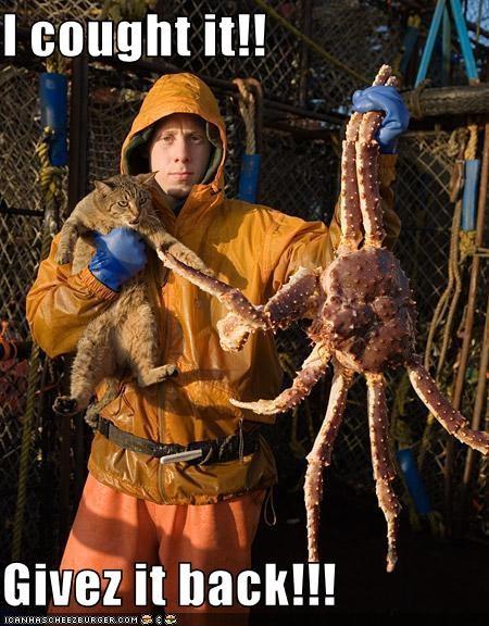 crabs nom nom nom want - 1560404224