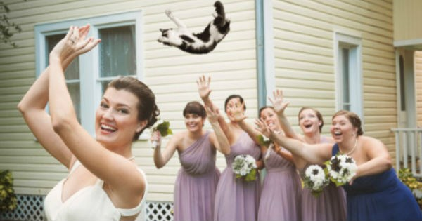 bride bouquet wedding Cats funny - 1563141