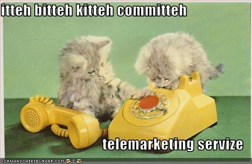 cute,ibkc,kitten,phone,work
