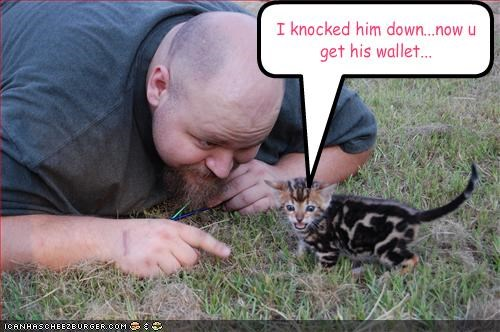 bad cat cute kitten plotting stealing thief - 1564160768