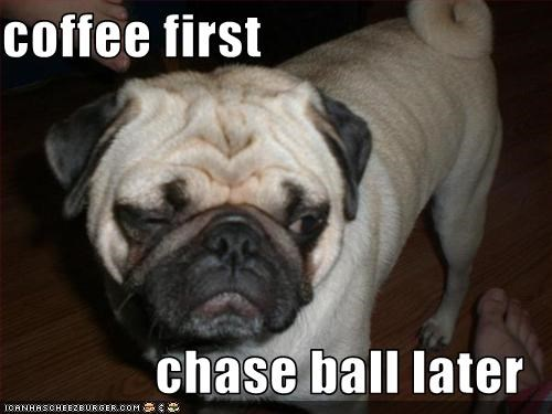 ball,coffee,morning,pug,tired
