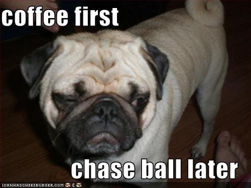 ball coffee morning pug tired - 1565730048