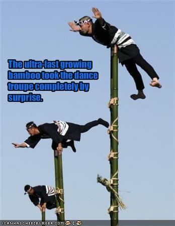 bamboo dance wtf - 1567406848