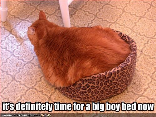bed,fat,ginger
