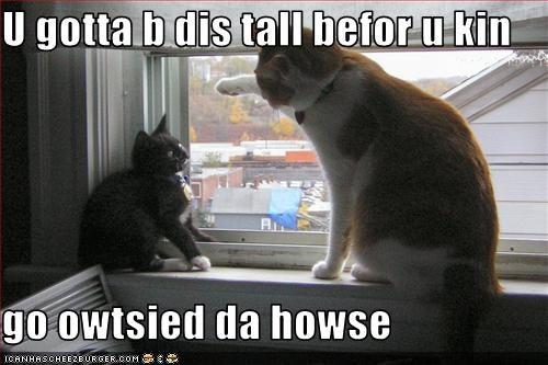 kitten lolcats lolkittehs outside rules - 1567643904