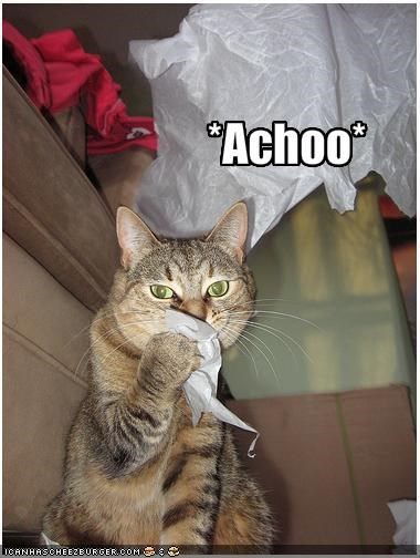 lolcats,polite,sneeze,tissue