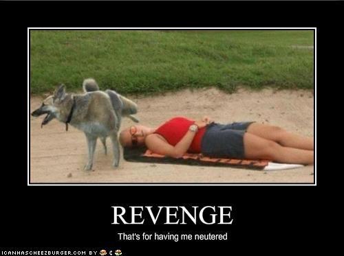 beach german shepherd neutered outside pee revenge - 1568439552