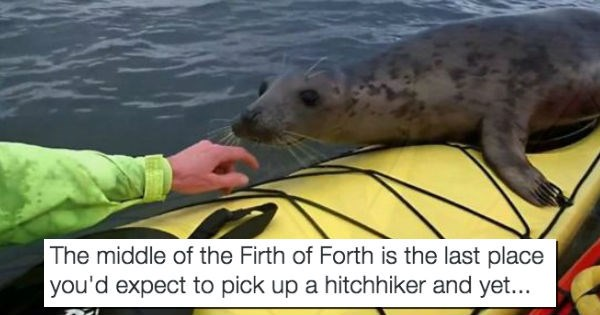 seal seals surprise wildlife kayak hitchhiking - 1570053