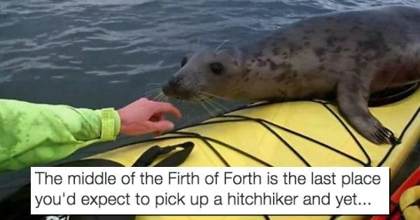 seal seals surprise wildlife kayak - 1570053