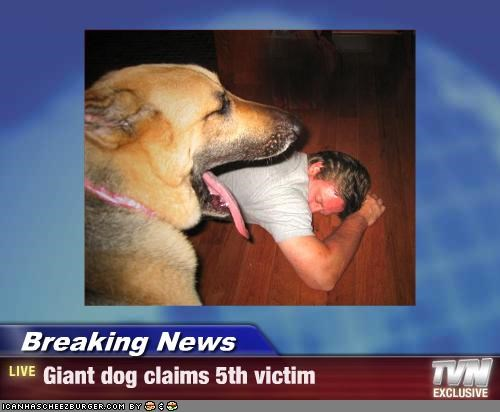 german shepherd,giant,murder,news,nom nom nom