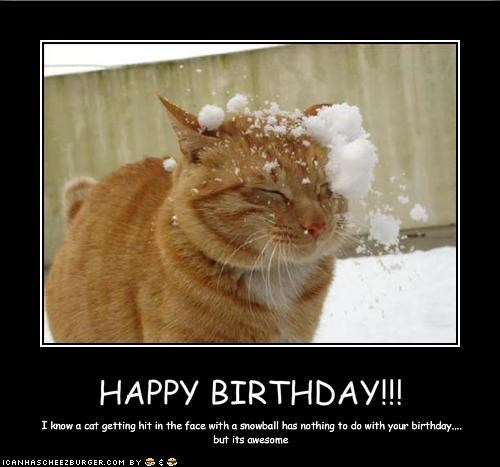 happy birthday memes with a cat getting hit by a snowball