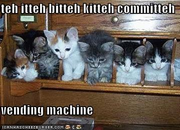 cute ibkc kitten lolcats lolkittehs vending machine - 1574775040