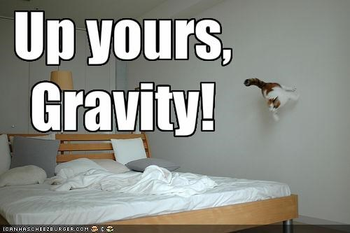 flying,Gravity,lolcats,wall