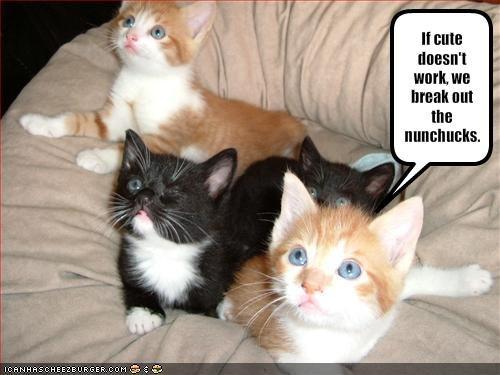 cute kitten lolcats lolkittehs ninjas nunchucks - 1577882880