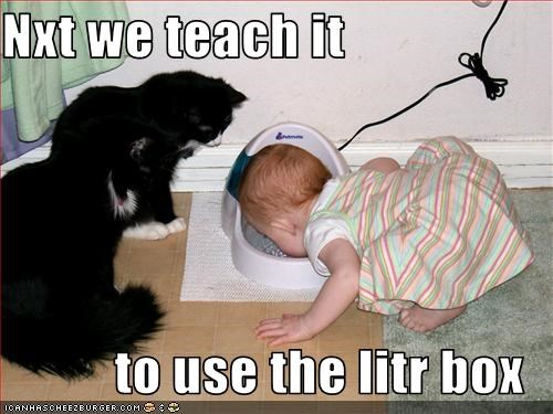 baby,litterbox,lolcats,teaching,water