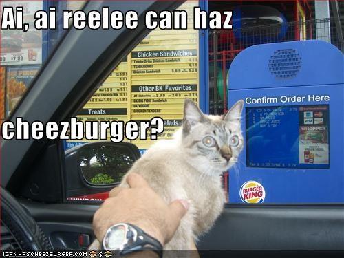Cheezburger Image 1578200320