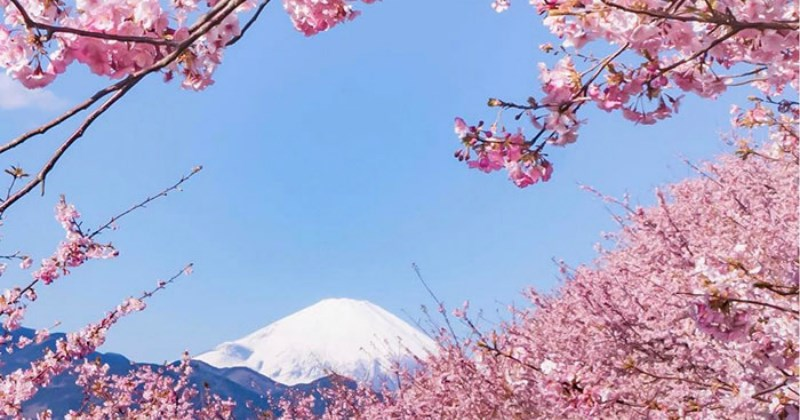 nature list beauty cherry blossoms - 1579525