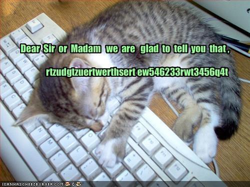 computer cute kitten lolcats lolkittehs nap sleeping - 1580154624