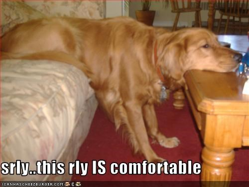 couch golden retriever nap - 1580321536