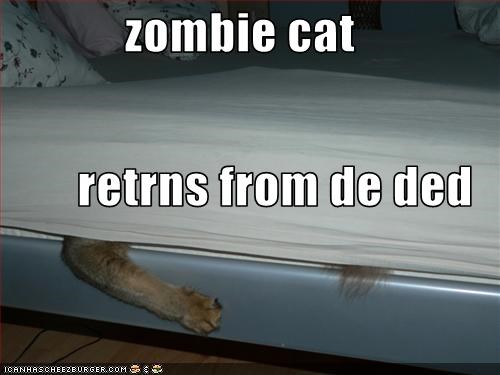lolcats,scary,undead,zombie