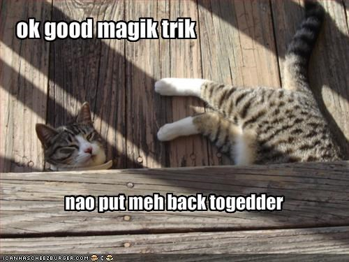lolcats magic trick upset - 1580841728