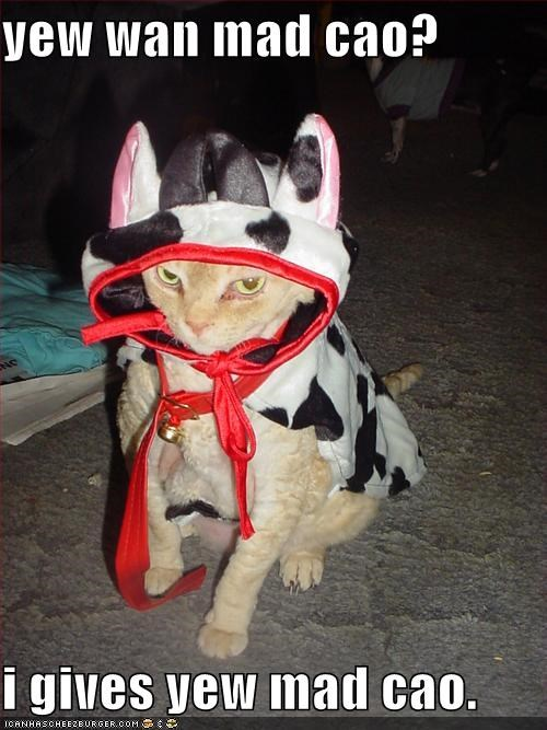 angry,costume,cow,ginger,lolcats