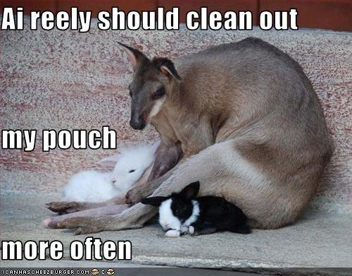 bunny clean cute kangaroo lolbuns lolkangaroos - 1584812800
