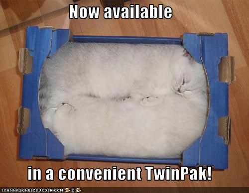 box cute kitten lolcats lolkittehs - 1585644288